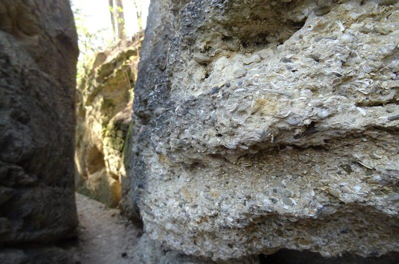 Muschelberg in Nexing