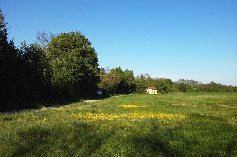Blumenwiese bei Parbasdorf