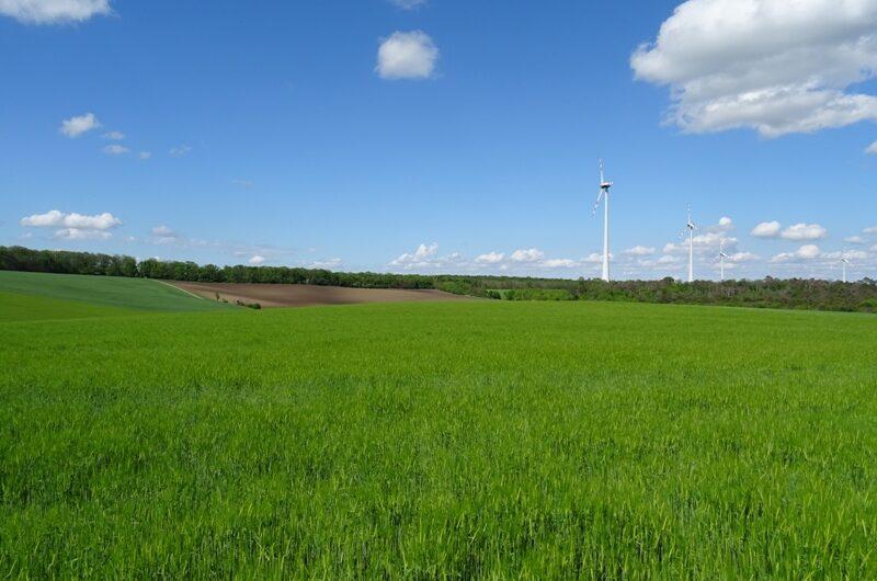 Felder am Matznerwald