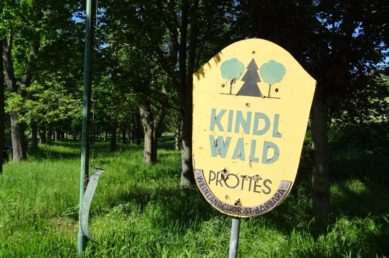 Kindl Wald in Prottes