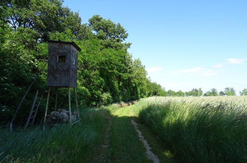 Am Waldrand bei Manhartsbrunn