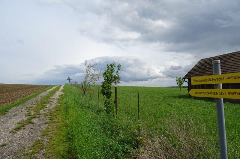 Am Waldberg bei Niederkreuzstetten