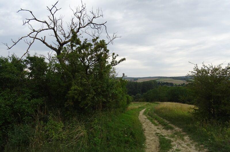 Auf dem Wartberg