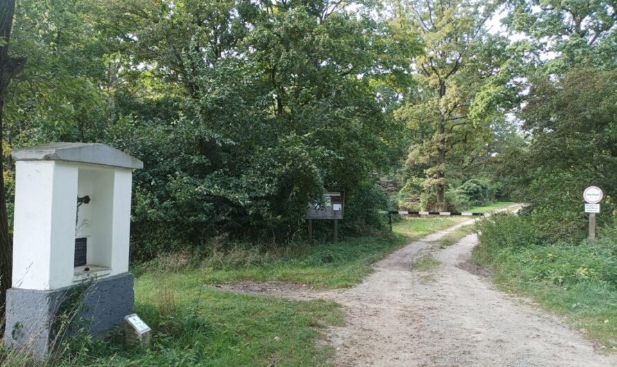 Weg in den Hochleithenwald